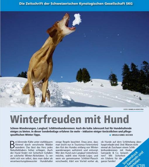 winterfreuden-mit-hund.jpg